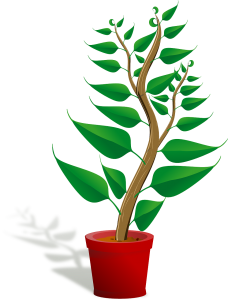 seedling, potted plant, sapling