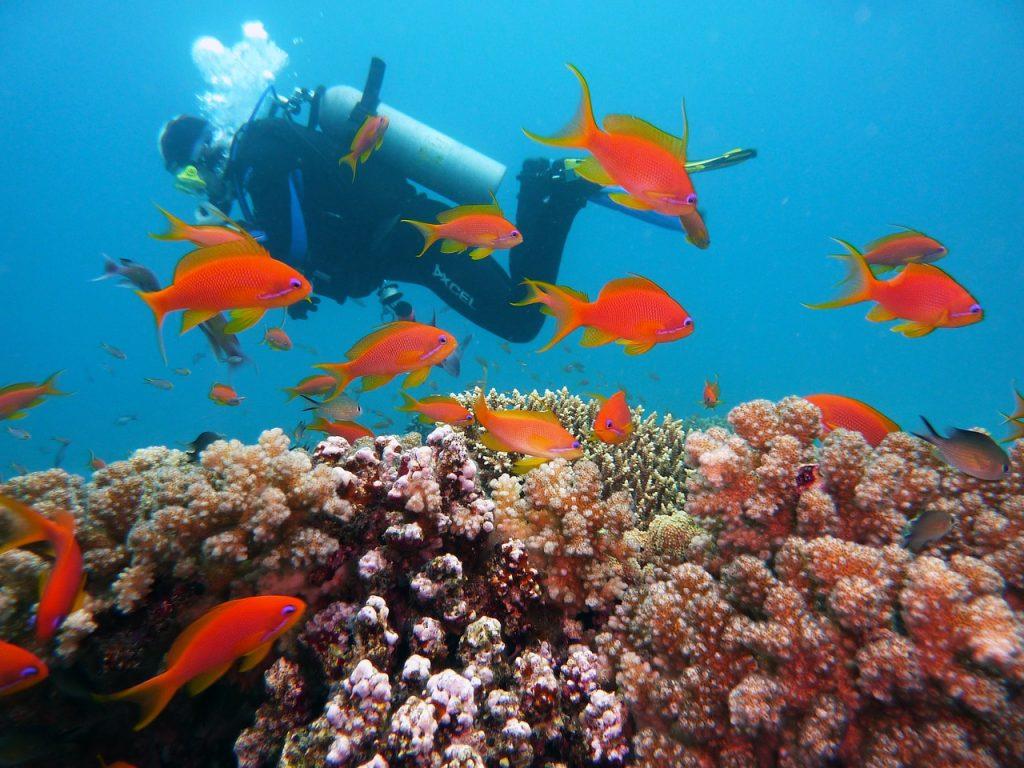 diving, underwater, water